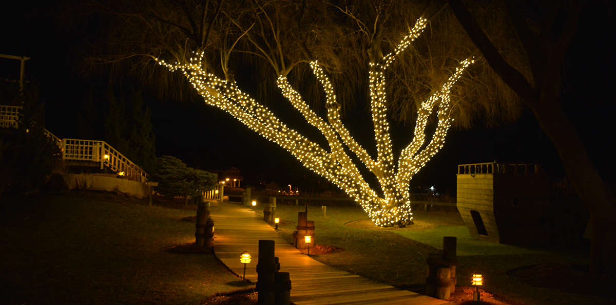 Cowfish at night with the Willow Tree all aglow.